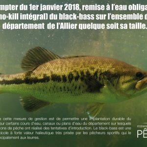 Remise à l'eau obligatoire du black-bass en 2018
