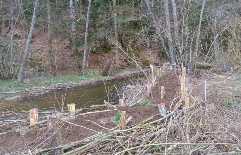 Travaux de restauration d'une berge sur la Besbre par l'AAPPMA d'Arfeuilles