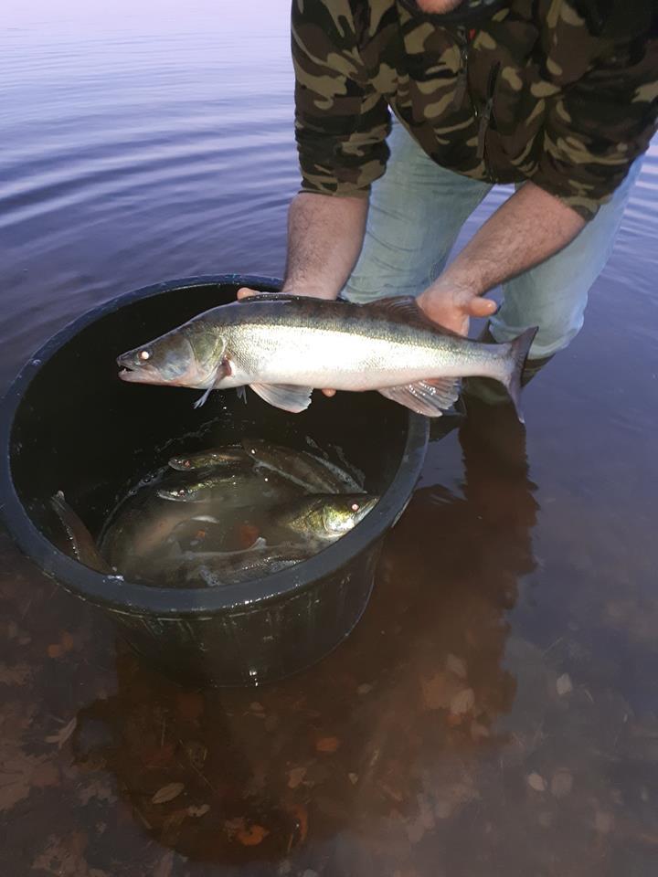 Empoissonnement des étangs de Saint Bonnet et de Tronçais