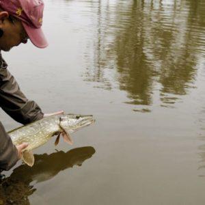 Fermeture de la pêche des carnassiers dimanche 27 janvier 2019