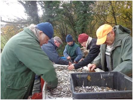 L'AAPPMA de Jaligny vidange l'étang du Vieux Chambord pour réempoissonner l'étang de Bert
