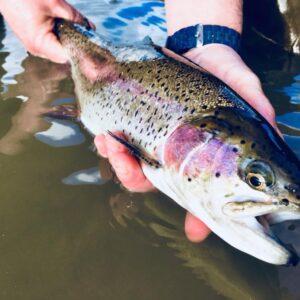 Journée Pêche de la truite sur la Bieudre au Veurdre – carte de pêche 2022 à gagner !